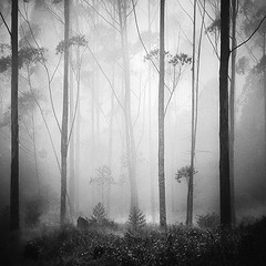 Forest Dream (Hengki Koentjoro) Tags: trees white mist black nature beauty grass leaves silhouette fog mystery indonesia square landscape java branch surreal silence particle layers serene somber mute tranquil mystic artlibres absoluteblackandwhite truthandillusion