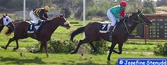 20040829_8_15 Firestorm and City Of London at Gteborg Galopp | Gothenburg, Sweden (ratexla) Tags: horses horse cute 2004 sports beautiful animal animals gteborg cool europe sweden gothenburg competition racing chestnut horseracing sverige equestrian racehorse thoroughbred tb fux thoroughbreds goteborg sorrel hst nonhumananimals racehorses hstar equuscaballus galopp nonhumananimal fullblod equusferuscaballus gteborggalopp 29aug2004 photophotospicturepicturesimageimagesfotofotonbildbilder