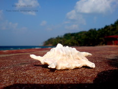 She sells sea shells on the sea shore (srijankundu) Tags: india andaman radhanagarbeach srijankundu earthasia