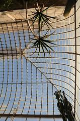 botanico 059 (blum1) Tags: botanico ortobotanico