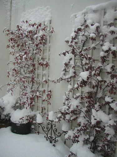 London Snow HY 0109 024