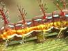 estudio a un gusano (ca.millionaire) Tags: insect beatle centipede gusano bicho insecto antenas cienpies
