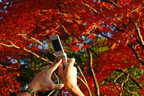 [Takao] Capture Autumn