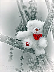 So lonely .. .. .. (Doue ) Tags: bear white tree teddy you stop lonely miss twigs malal wallah 5laa9