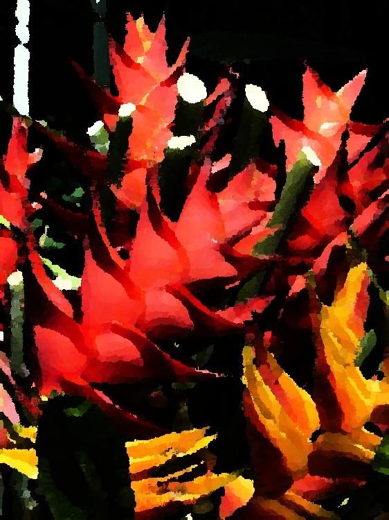 Art Painting : Oiseaux du paradis