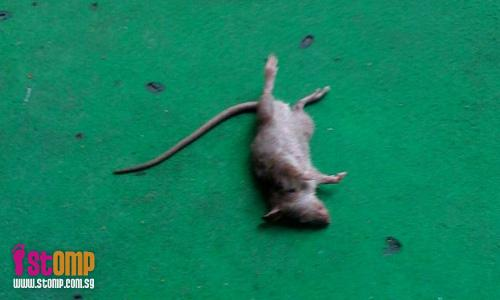 Dead rat found lying on Maxwell Market performers' stage