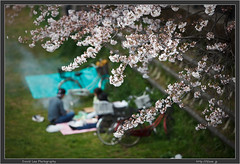 Two more days of Hanami