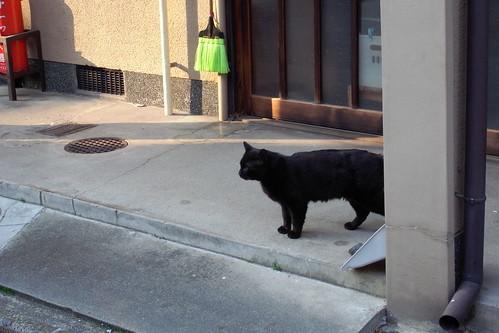 Today's Cat@20090407