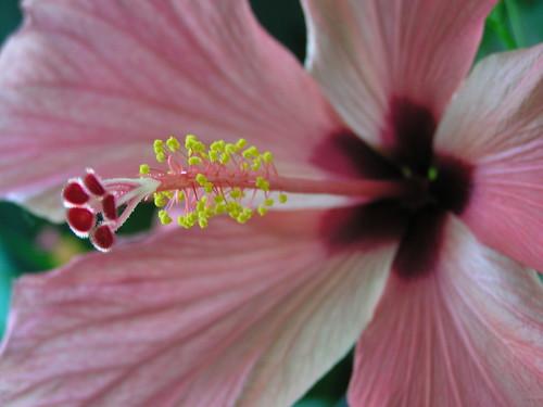 Kukkanen lähikuvassa