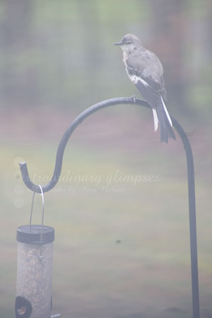 bird-on-feeder_040509_0002web