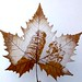 pressed leaf sculpture-leaning tower by moumoualwayssmile