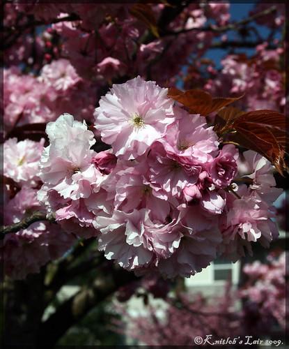 kukkia puissa 1