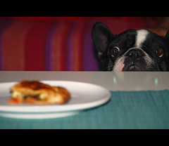 . (susilalala) Tags: food frenchbulldog empanada nuka bulldogfrances susilalala