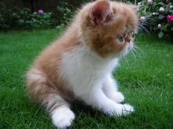 調整大小kitten135_0503222408_499807839