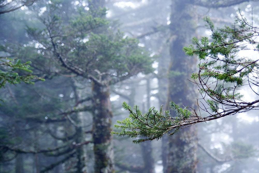 奇萊Day2-80 森林