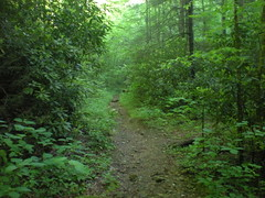 56 - Little East Fork Trail 1
