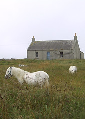 Daliburgh Ponies (DerickCarss) Tags: horses horse house home field island scotland farm south cottage scottish pony croft western ponies outer isles uist hebrides deas uibhist daliburgh