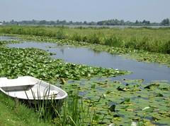 Reeuwijkse Land (YIP2) Tags: holland green nature netherlands landscape spring lakes lakedistrict polder dutchlandscapes dutchlandscape reeuwijk reeuwijkseplassen greenheart reeuwijkseland