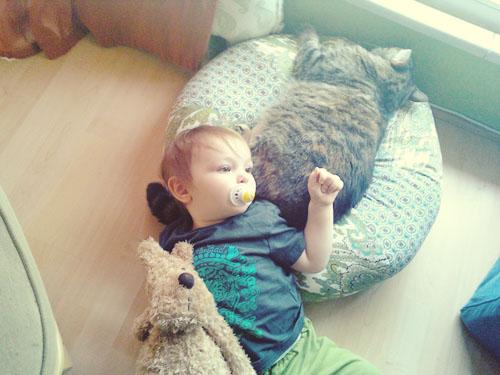 cedar, marmie doggie & kitty amber