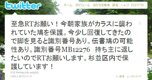 Twitter - kako-chan- 至急RTお願い!今朝家族がカラスに襲われていた鳩を保 ...