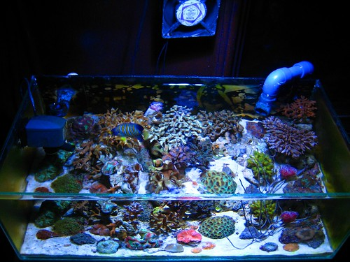 seriousreefer91u0027s 10 gallon reef tank & Vote for June 2010 nTOTM!! - Reef Central Online Community azcodes.com