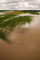 20110516-NRCS-LSC-0057 (USDAgov) Tags: usa river corn flood ms dying usda asphyxiation departmentofagriculture yazoocity