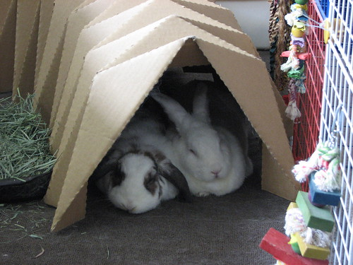 snuggling in the tunnel