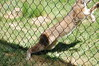 Leap! (JSleeper) Tags: oregon lynx greatcatsworldpark