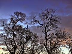 Arterias bajo el cielo (Equinxe 8Th) Tags: planta hojas cara vida cielo nubes silueta visual tronco rama tiempo efecto ramas firmamento venas arterias