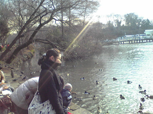 People watching the ducks at Inokashira Pond