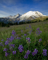 Rainier in the summer (Mike Hornblade) Tags: summer mountain sunrise landscape d70 august wildflowers mtrainier mtrainiernationalpark specland