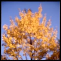 秋 (gullevek) Tags: blue autumn sky plants tree 6x6 film yellow japan geotagged iso100 tokyo kodak outoffocus 日本 東京 秋 木 港区 rolleiflex28c epsongtx900 kodakektachromeepn100 geo:lat=35659879 geo:lon=139759025