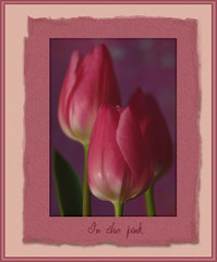 In the pink (inky2008.....) Tags: pink closeup tulips textures flowerarrangement paintingeffect blueribbonwinner cherryontop threeflowers diamondclassphotographer flickrdiamond theboldflower flowererotica betterthangood goldstaraward