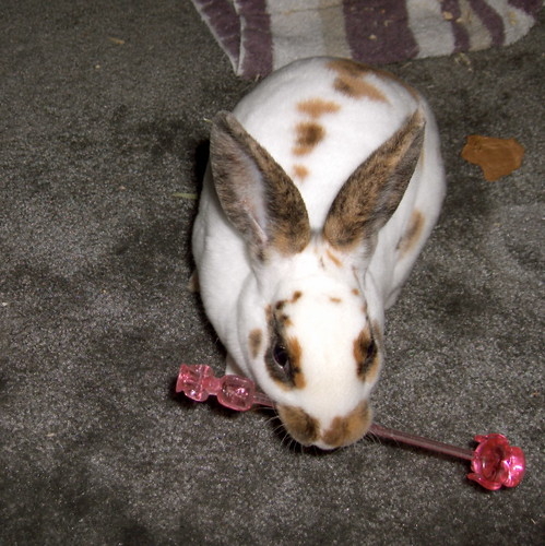 Roxie Rabbit Plays Fetch with a Pink Poodle Swizzle Stick