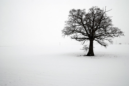 CHARITY PRINT AUCTION FOR HAITI: Lone Tree