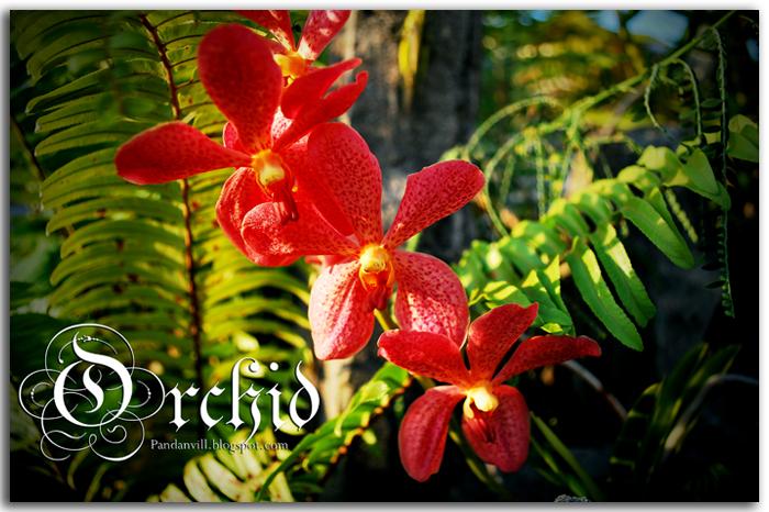 orchid utk blog