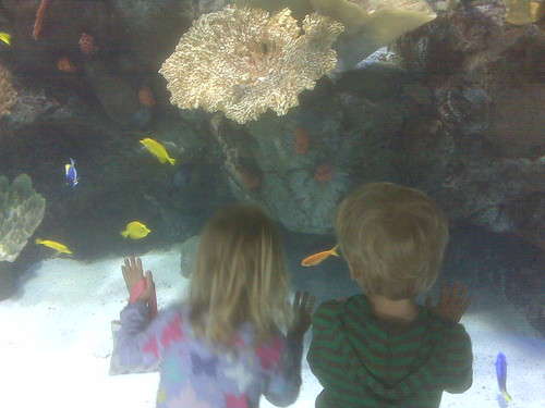 The twins checking out the fish...