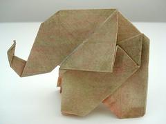 elefant  cebola