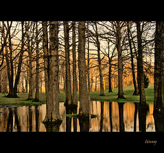 Brunet Park (Linda Goodhue) Tags: park trees sunset ontario reflection nature water grass photoshop spring scenery branches windsor lasalle hdr photomatix tonemapped the4elements nikond80 flickrdiamond vosplusbellesphotos nikcoloureffex