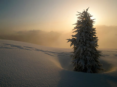 Morning glory (Christopher J. Morley) Tags: mountain sunrise treesilhouette spring 2009 freshsnow beautifulbritishcolumbia worthsleepingonsnowfor