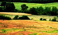 Nature (Sugar Mind) Tags: life trees nature colors landscape peace lawn natura pace toscana terra plain colori paesaggio vita mygearandme mygearandmepremium mygearandmebronze mygearandmesilver mygearandmegold mygearandmeplatinum