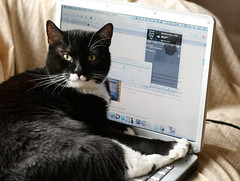 Laptop-top Cat, or Jester Meets Leopard (wabisabi2015) Tags: apple cat computer notebook keyboard jester laptop tuxedo leopard dell macos inspiron takeover 1056 1525 hackintosh cc200 cc100 hackbook ideneb