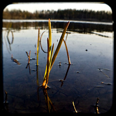 Growing in the water (Aniara Trast) Tags: blue lake seaweed green countryside sweden seagrass argus seventyfive ttv