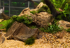 Cube Planted Tank at The Green Machine (Stu Worrall Photography) Tags: plants fish green aquarium stu machine aquascape the plantedtank planted plantedaquarium aquascaping worrall tgm stuworrall ukaps graemeedwards