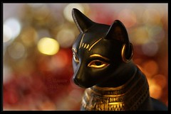 Bastet (scribe13 ~ Maureen) Tags: cat colorful dof god bokeh bast goddess egyptian diety bastet