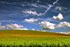 Cheltenham United Kingdom (Jiri P.) Tags: summer nature yellow fields skycloudssun riotofcolours colourartaward