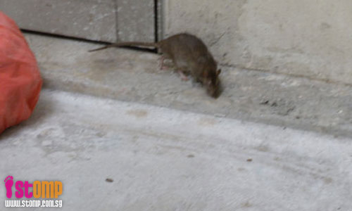 Get rid of the rats infesting this Jurong West block, says STOMPer