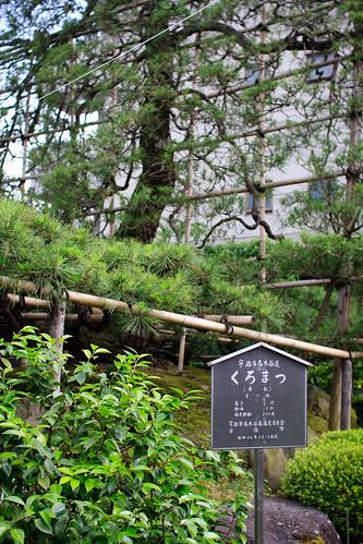 06.15 To-Kichi Cafe 2