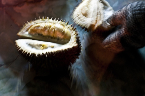 Durian - The King of Fruits