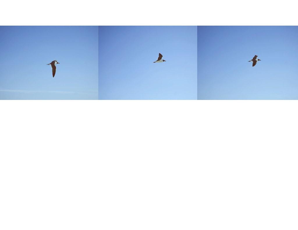 birds._Page_06